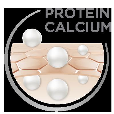 Protein Calcium